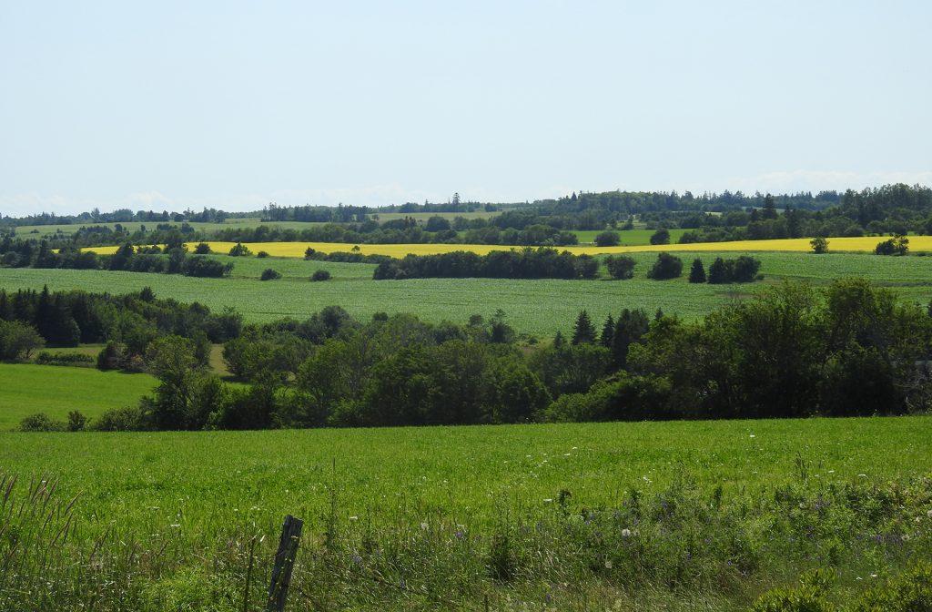 North Rustico fields